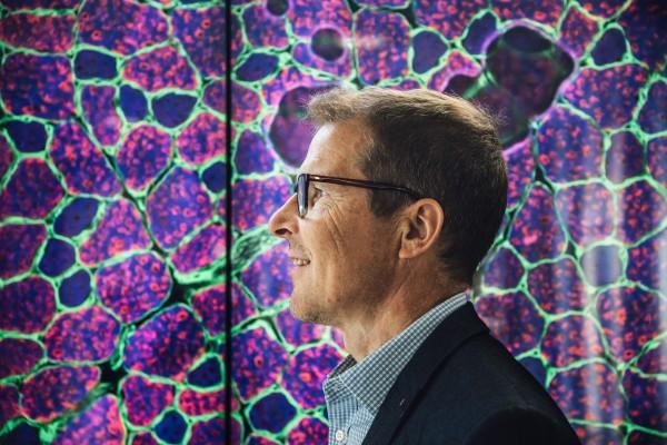 Pictures taken by WebMicroscope can look like artwork. Kari Pitkänen stands in front of a picture of a fluorescent dyed rat's muscle tissue.